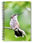 Charming Hummingbird Square Spiral Notebook