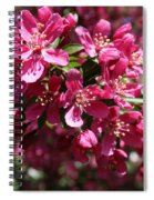 Cherry Blossoms 2019 IIi Spiral Notebook