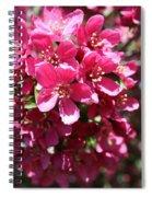 Cherry Blossoms 2019 Iv Spiral Notebook