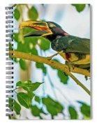 Chestnut-eared Araacari Spiral Notebook