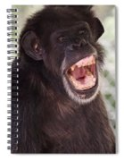 Chimp With Mouth Open Spiral Notebook