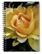 Classy Struck Gold Spiral Notebook