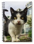 Close Up Cat On The Street Spiral Notebook