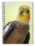 Close Up Of A Cockatiel Spiral Notebook