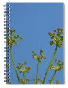 Close Up Of Fennel Flowers. On Sky Background Spiral Notebook