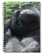 Close-up Shot Of Silverback Gorilla Making An Angry Face Spiral Notebook