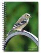Closeup Of Goldfinch Spiral Notebook