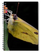 Clouded Sulfur Spiral Notebook