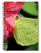 Cloudless Sulphur Spiral Notebook