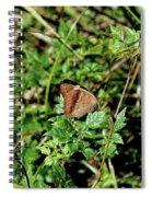 Common Buckeye Butterfly Spiral Notebook