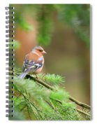 Common Chaffinch Fringilla Coelebs Spiral Notebook