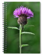 Common Knapweed 1 Spiral Notebook