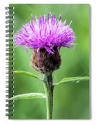 Common Knapweed 2 Spiral Notebook