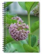 Common Milkweed Spiral Notebook