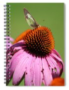 Cone Flower Butterfly At Rest Spiral Notebook