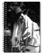 Cool Gypsy Horse Spiral Notebook