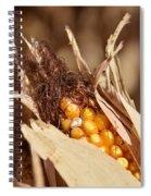 Corn In Dry Husk Spiral Notebook