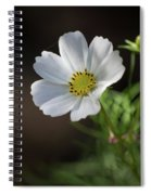 Cosmos In The Cottage Garden Spiral Notebook