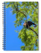 Costa Rica Capuchin Momma And Baby Aboard Spiral Notebook