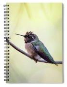 Costa's Humminbird On A Branch  Spiral Notebook