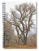 Cottonwood Az Bayou Leafless Tree Sky Clouds Path 31262019  Spiral Notebook