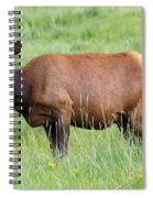 Cow Elk Grazing Spiral Notebook