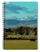 Cows Eat And Chew Their Cud Spiral Notebook
