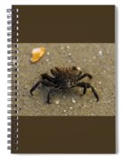 Curious Crab Spiral Notebook