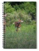 Curious Fawn Spiral Notebook