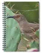 Curve-billed Thrasher, Cochise County Arizona Spiral Notebook