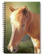 Cute Chestnut Pony Spiral Notebook