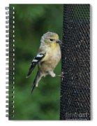 Cute Goldfinch At Feeder Spiral Notebook