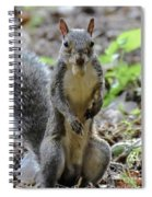 Cute Squirrel Spiral Notebook