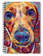 Dachshund 6 Spiral Notebook