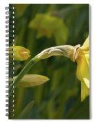 Daffodil In Sun Spiral Notebook