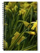 Daffodil Starlight Spiral Notebook