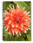 Dahlia Bloom Flower Spiral Notebook