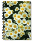 Daisy Crazy For You Spiral Notebook