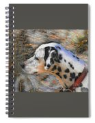 Dalmatian Dog Spiral Notebook