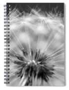 Dandelion Seeds Pod Macro Spiral Notebook