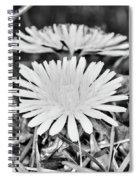 Dandelion Up Close And Personal Black And White Spiral Notebook