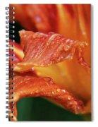 Daylily Dewdrops Spiral Notebook