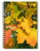Days Of Autumn 24 Spiral Notebook