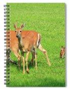 Deer Looking At You Spiral Notebook
