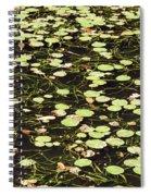 Dnrs1007 Spiral Notebook