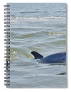 Dolphins Spiral Notebook