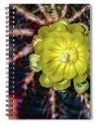 Domitilla Spiral Notebook