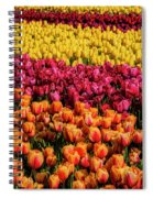 Dreaming Of Endless Colorful Tulips Spiral Notebook