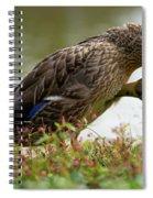 Duck 3 Spiral Notebook