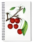 Early Richmond Cherries Spiral Notebook